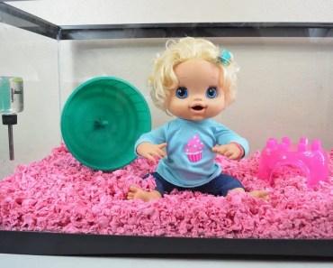 Baby Alive Hamster Cage Setup! - Molly Sets Up Hamster House! - hamster videos - baby alive hamster cage setup molly sets up hamster house hamster videos