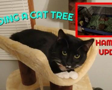 BLIND HAMSTER UPDATE + BUILDING A CAT TREE - blind hamster update building a cat tree