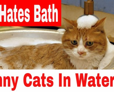 Cats Hates To Bath - Funny Cats In Water Compilation - cats hates to bath funny cats in water compilation