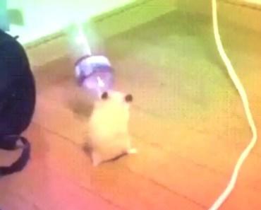 dancing hamster with bottle - dancing hamster with bottle