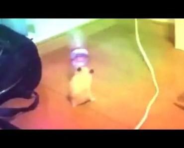 DANCING MEME HAMSTER - dancing meme hamster
