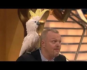 Dieser Kakadu hat´s drauf! - TV total - dieser kakadu hats drauf tv total