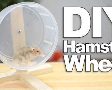 DIY Hamster Wheel | #DIYJuly - diy hamster wheel diyjuly