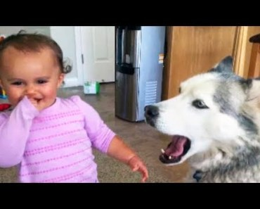 Funniest Babies Laughing at Pets Hysterically - TRY NOT TO LAUGH - funniest babies laughing at pets hysterically try not to laugh