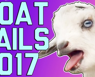 Funny Goats: Screaming Is Optional (March 2017) || FailArmy - funny goats screaming is optional march 2017 failarmy