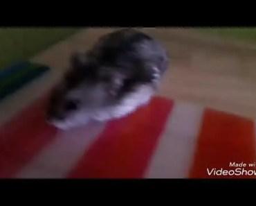 Funny Hamster 3 - funny hamster 3