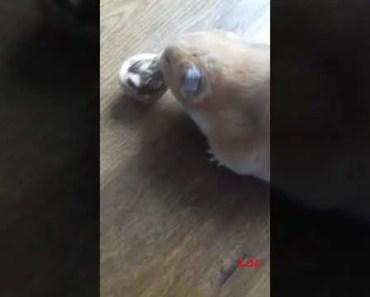 Funny hamster Pt.4 - funny hamster pt 4