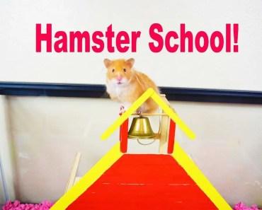 Hamster DIY! - Let's Build A Hamster School! - Hamster Cage Tour! - hamster diy lets build a hamster school hamster cage tour