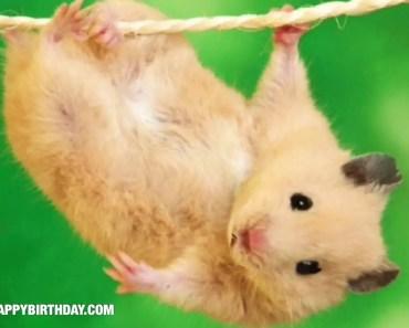 Hamster Happy Birthday Wishes - hamster happy birthday wishes