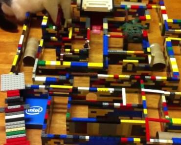 Hamster Lego Maze - hamster lego maze