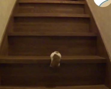 Hamster Pull Up Workout - Climbs Stairs - hamster pull up workout climbs stairs