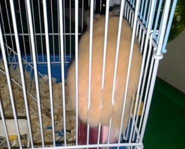 Hamster running on hamster wheel - hamster running on hamster wheel