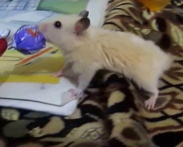 hamster wants candy - hamster wants candy