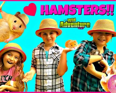 Hamsters for Kids! HAMSTER FACTS - Kids Playing with Family Fun Hamster Pet - hamsters for kids hamster facts kids playing with family fun hamster pet