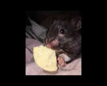 My Hamster Luna Passed away today - my hamster luna passed away today