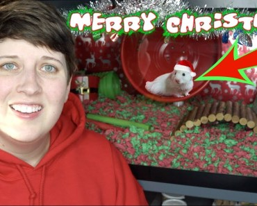 MY NEW HAMSTER + CHRISTMAS CAGE TOUR - my new hamster christmas cage tour