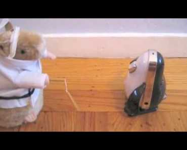 The love between an iPenguin and a Kung-Fu Fighting Hamster. So funny!! - the love between an ipenguin and a kung fu fighting hamster so funny