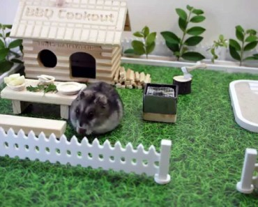 Tiny hamster having a bbq cookout - tiny hamster having a bbq cookout