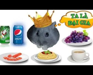 Tony TV Đại Gia Hamster Ăn Buffet - Hamster Eats In Five-Star Restaurant - tony tv dai gia hamster an buffet hamster eats in five star restaurant