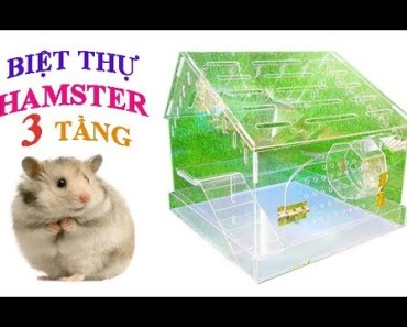 Tony TV Xây Biệt Thự Cho 2 Bé Hamster - How To Build A Villa For Hamster - tony tv xay biet thu cho 2 be hamster how to build a villa for hamster