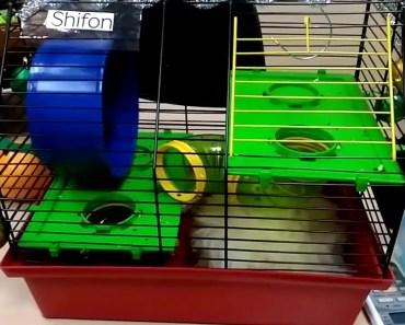 Funny hamster - 1514919195 funny hamster