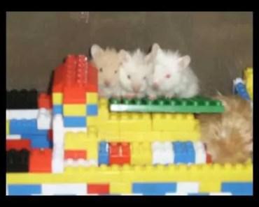 FUNNY HAMSTER - 1516348675 funny hamster