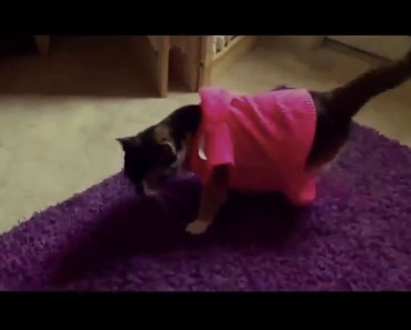 Cats Jumping Most Funny Jumping Cats Fail - Funny Cats Jumping and Missing Video Compilation 9531 - cats jumping most funny jumping cats fail funny cats jumping and missing video compilation 9531