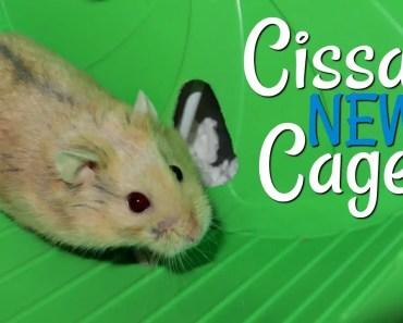 Cissa's New Cage || Hamster Bin Cage Tour - cissas new cage hamster bin cage tour