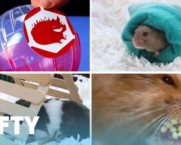 Cute And Cuddly DIY Projects For Your Hamster - cute and cuddly diy projects for your hamster