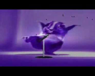 Cute hamster dance - cute hamster dance