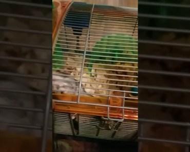 Funny hamster trick - funny hamster trick
