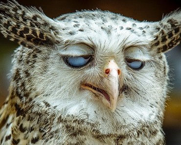 Funny Owls And Cute Owls Compilation - funny owls and cute owls compilation