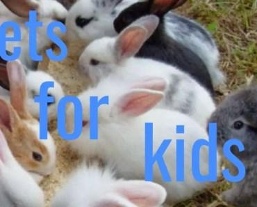 funny pets (hamster,rabbit) - funny pets hamsterrabbit