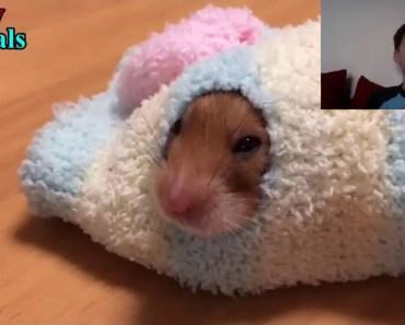 hamster compliation - hamster compliation