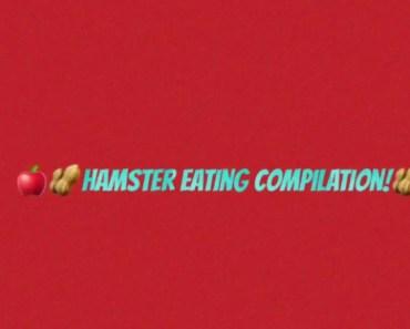 Hamster Eating Compilation| crazy hamster woman - hamster eating compilation crazy hamster woman