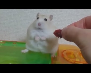 Hamster Has An Existential Crisis - hamster has an existential crisis
