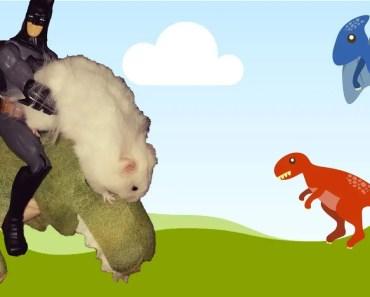 HAMSTER MEETS DINOSAUR AND BATMAN - DANCING HAMSTER - FUNNY HAMSTER - hamster meets dinosaur and batman dancing hamster funny hamster