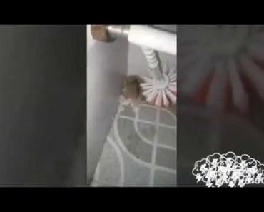 Hamster Quậy Dễ Thương | My Pet - hamster quay de thuong my pet