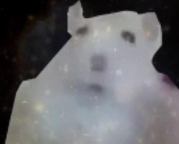 Hamster Transcendance - hamster transcendance