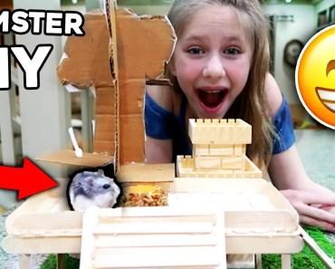 Hamsters Climbing Fort! 3 Hamster DIY's - hamsters climbing fort 3 hamster diys