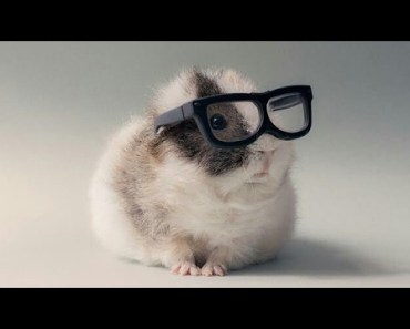 Hamsters - The funny thing is this hamsters - hamsters the funny thing is this hamsters