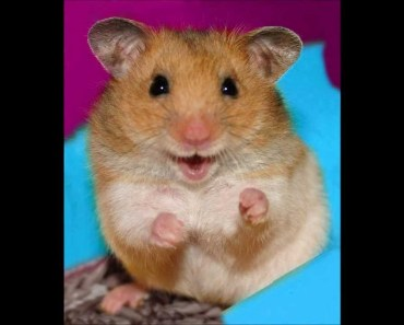 Harlem Hamster Shake Crazy Dance 2013 Fail Not, Just Do It!! - harlem hamster shake crazy dance 2013 fail not just do it