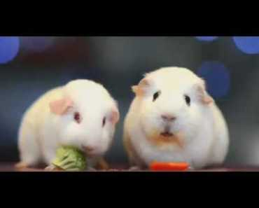"""Hello darkness my old friend """"version two guinea pigs"""" - hello darkness my old friend version two guinea pigs"""
