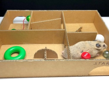 How to Build Creative Labyrinth for Homemade Hamster - how to build creative labyrinth for homemade hamster