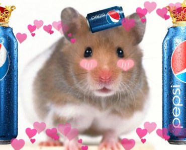 How To Mini Hamster Cage & Toys Tutorial // DIY Miniature Pet Cocacola Pepsi - how to mini hamster cage toys tutorial diy miniature pet cocacola pepsi