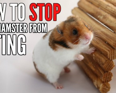 HOW TO STOP A HAMSTER FROM BITING - how to stop a hamster from biting