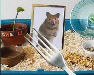 Kluna got a HAMSTER for ANIMAL DAY!!! Kluna Tik Dinner #35 | ASMR eating sounds no talk - kluna got a hamster for animal day kluna tik dinner 35 asmr eating sounds no talk