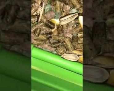 Monkey bar hamster - monkey bar hamster