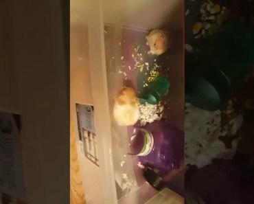My hamster is cute - my hamster is cute