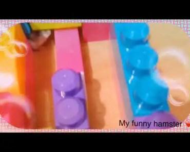My hamster labyrinth - my hamster labyrinth